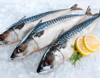 Oily fish ()