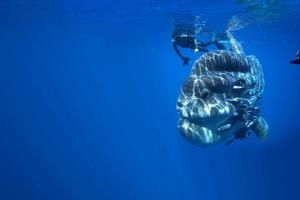 Goran Ehlme underwater photography ()