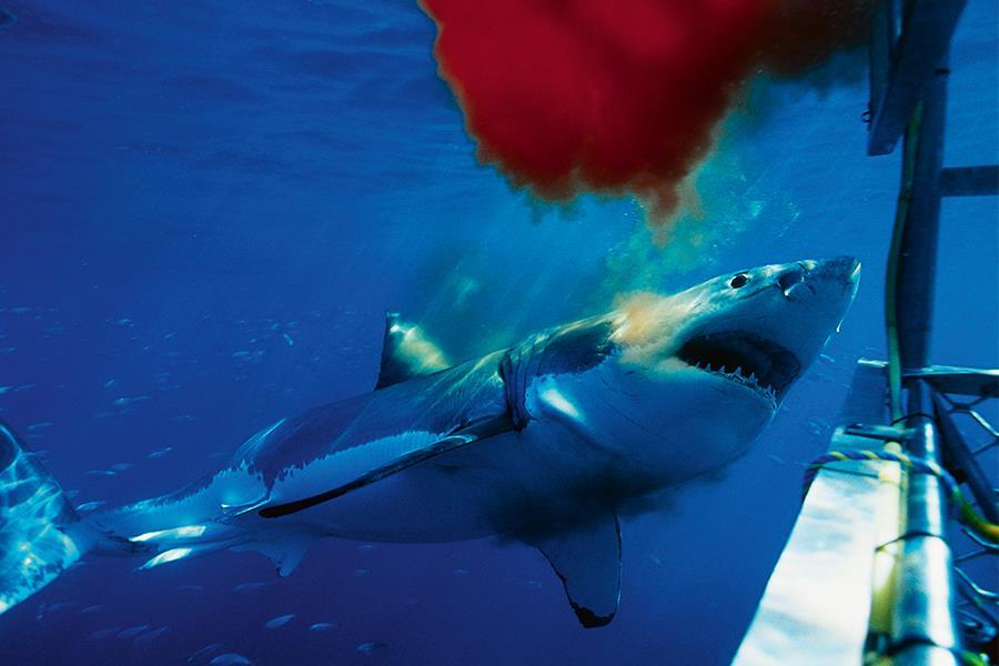 Shark (Thinkstock)