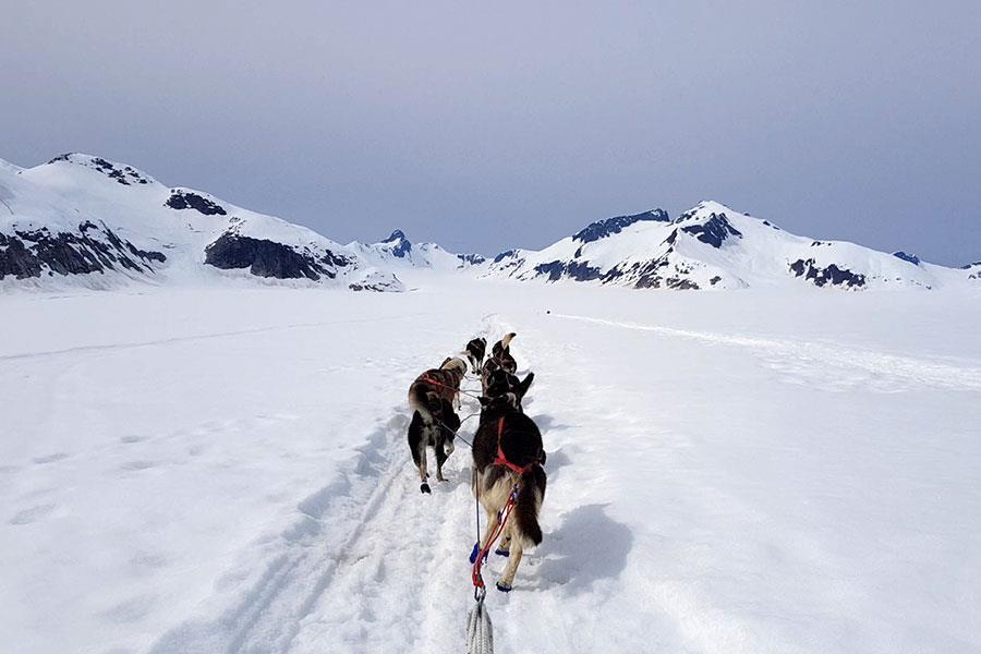 Dog sledding with Alaskan huskies on Norris Glacier in Juneau Alaska ()